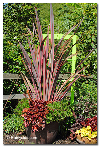 Phormium, heucheras and echevarias