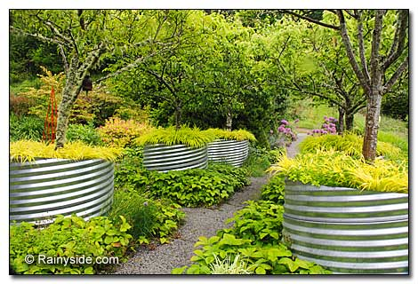 Fruit Trees And Corrugated Metal