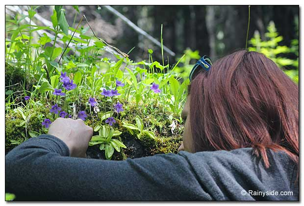Stephanie Smith checks out butterworts growing on a rock.